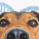 hond en dna